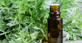 11 Amazing Health Benefits of Mugwort Essential Oil